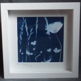 Framed Cyanotype - Tall Poppy (750x733)