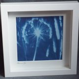 Framed Photogram Allium II (750x728)