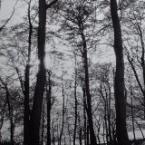 Tall Trees, Corbar Woods - Selenium toned