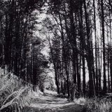 Tree Walk, Goyt Valley - Selenium Toned