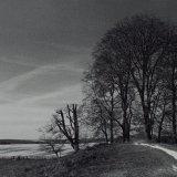 Trees, Avebury Henge - Selenium Toned