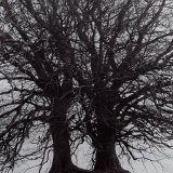 Two Trees - Selenium Toned on Art 300 paper