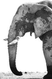 Elephant bull portrait, Etosha