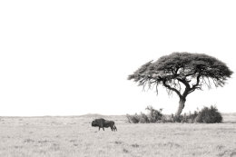 Savana at Etosha Pan, Etosha National Park