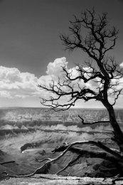Grand Canyon (IV)