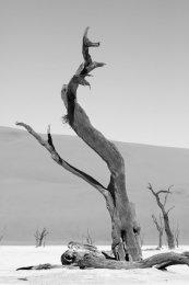 Dancing trees (I), Dead Vlei, Namib desert