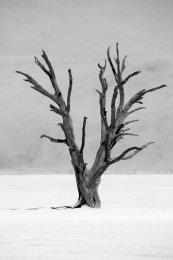 Dancing trees (V), Dead Vlei, Namib desert