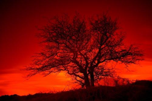 IR_Dartmoor_Hawthorn_2