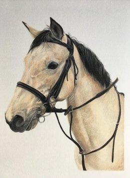 A4 coloured pencil portrait