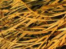 Flaxen Grass............... Japan