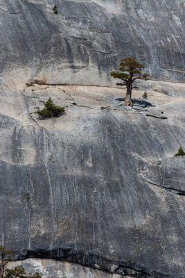 Yosemite........ Lone Pine.