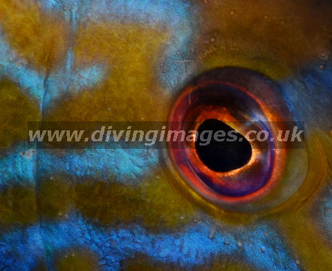 """Marine Abstract 1st place: """"I Have My Eye on You"""" by Mark Lavington"""