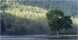 Buttermere Trees, Lake District