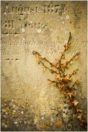Lichen 'Flowers'