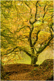 Autumn Colours, Exmoor
