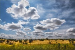 Puglia landscape and meadow