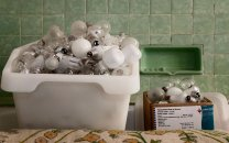 NT Tyntesfield, Box of bulbs in a bath