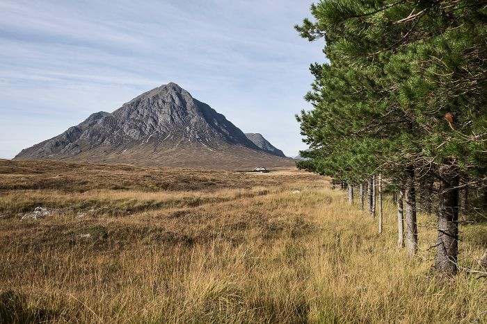 Buchaille and trees