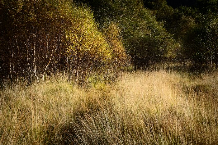 Glen Finnan trees