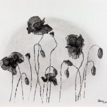 Remembrance: Poppies