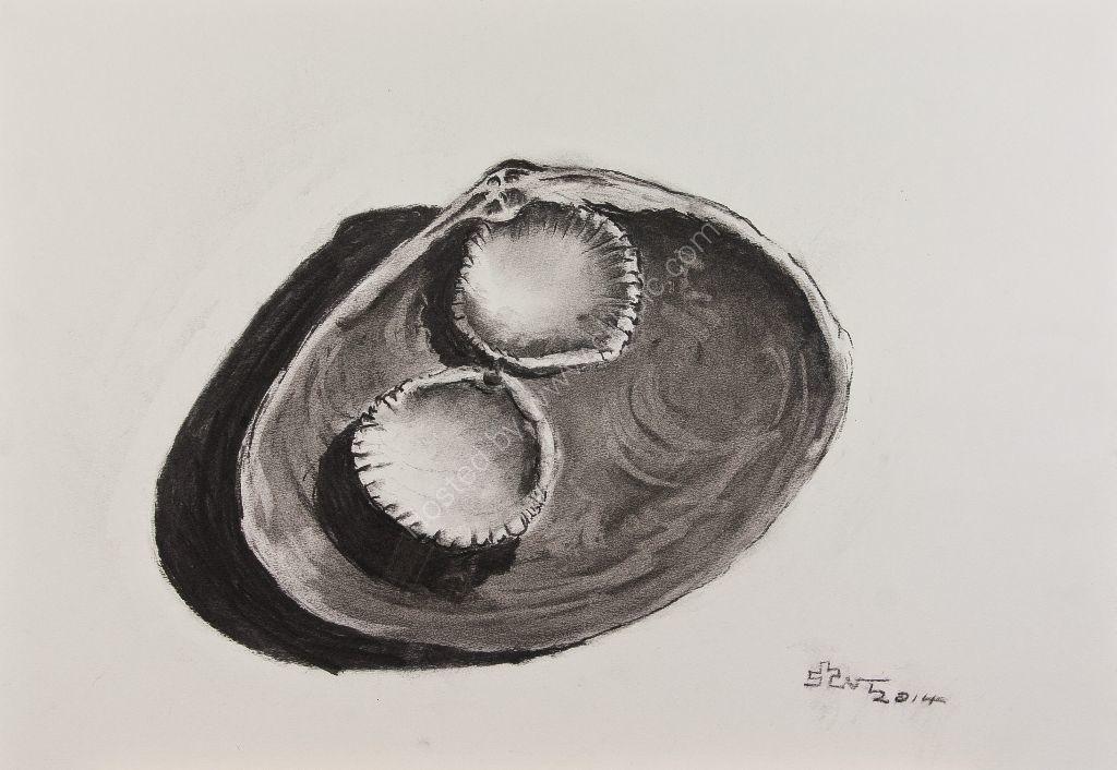 Sea Shell Trio
