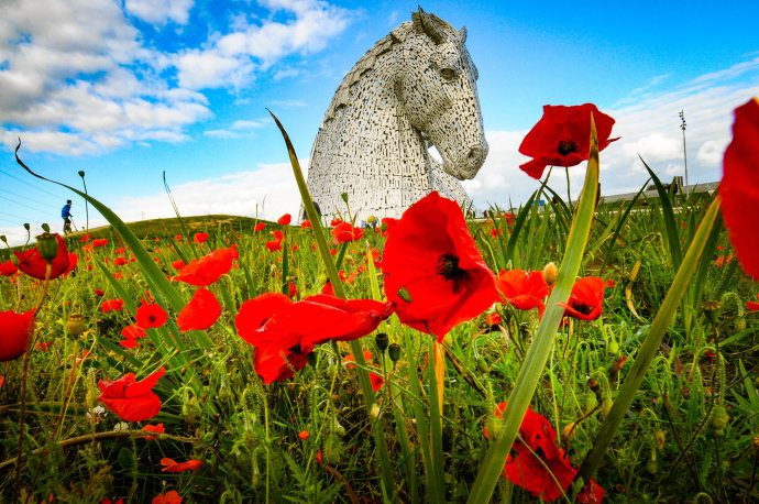 Poppies by the Kelpies