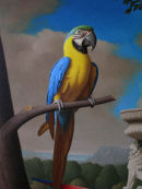 'Yellow & Blue Macaw' Detail from Grand Macaws No.2
