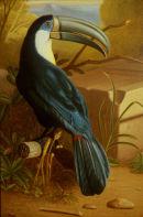 'Exotic Bird Garden No.2' Detail