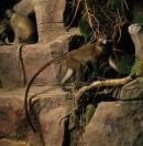 Primatarium - 'Monkey'
