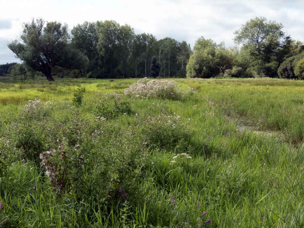 A Country Meadow 1