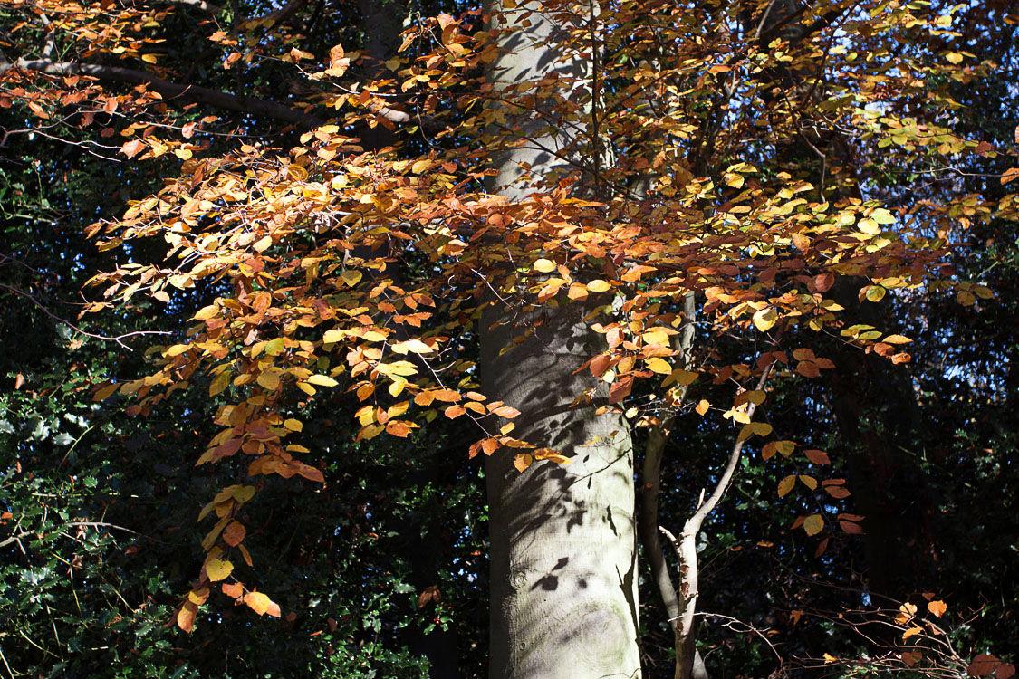 Golden Leaves 1