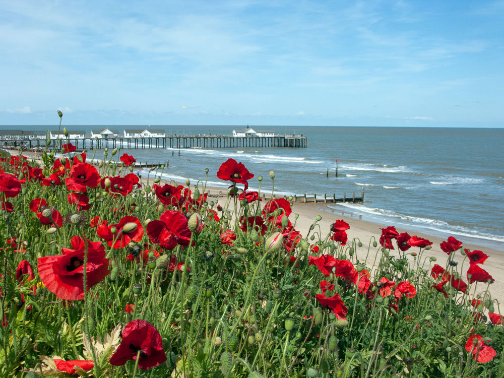 Poppies at Southwold 1