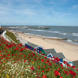 Poppies at Southwold 2