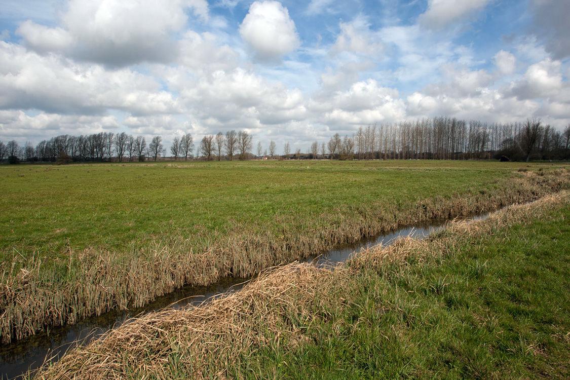 Suffolk Countryside 1