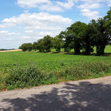 Suffolk Countryside 5