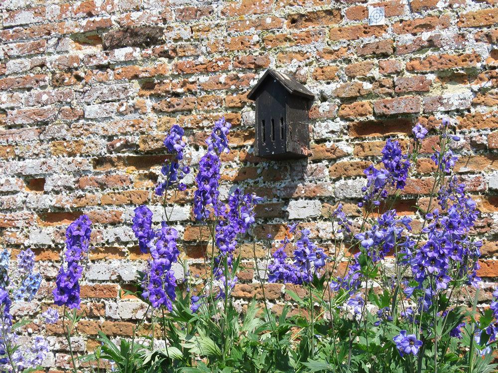 Walled Garden at Felbrigg Hall 9