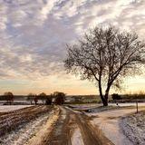 Winter Scene 8