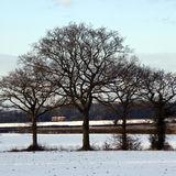 Winter  Scene 4