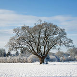 Winter  Scene 5