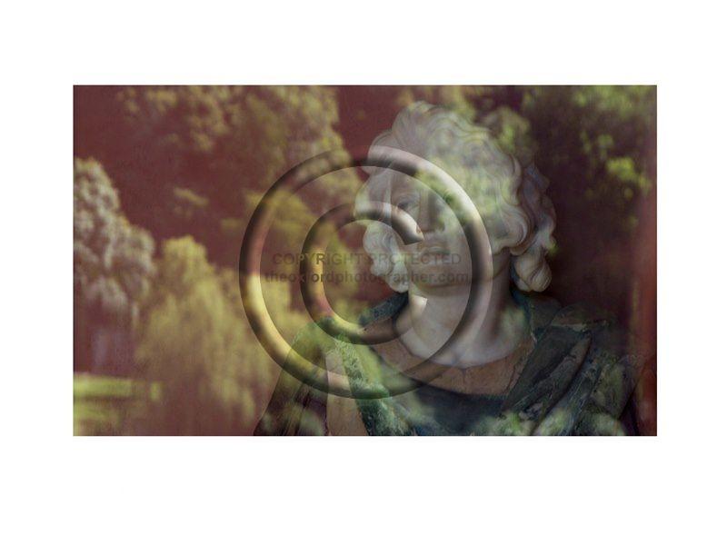 SOM Garden Emperor