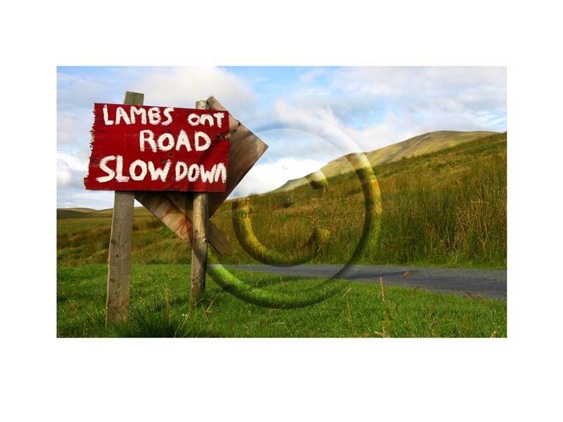 YKS Lambs Ont Road