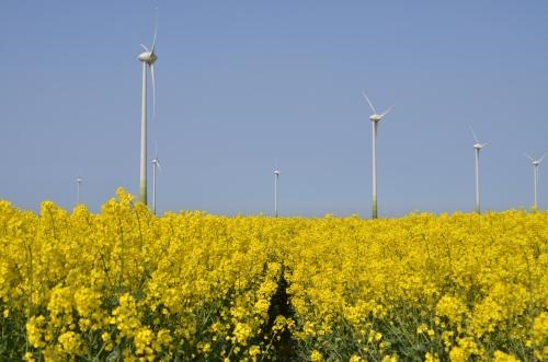 Conisholme Fen Wind Farm, Lincs