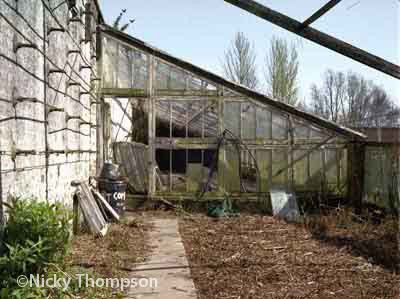 glasshouse I