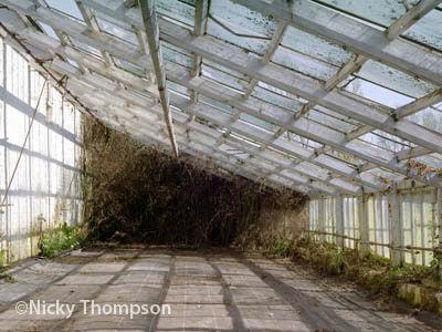 glasshouse VI