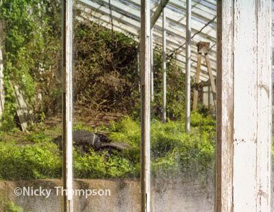 glasshouse window detail