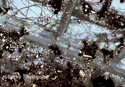 glasshouse I detail