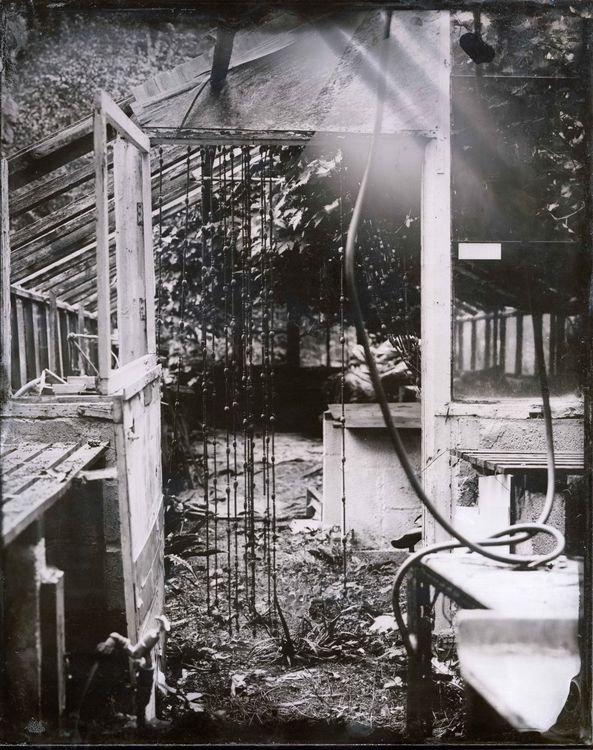 Inside Lesley's greenhouse
