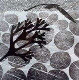 Gull Rain & Seaweed