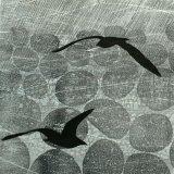 Gulls Rain & Stones