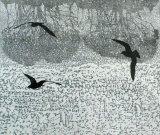 Three Gulls & Trees